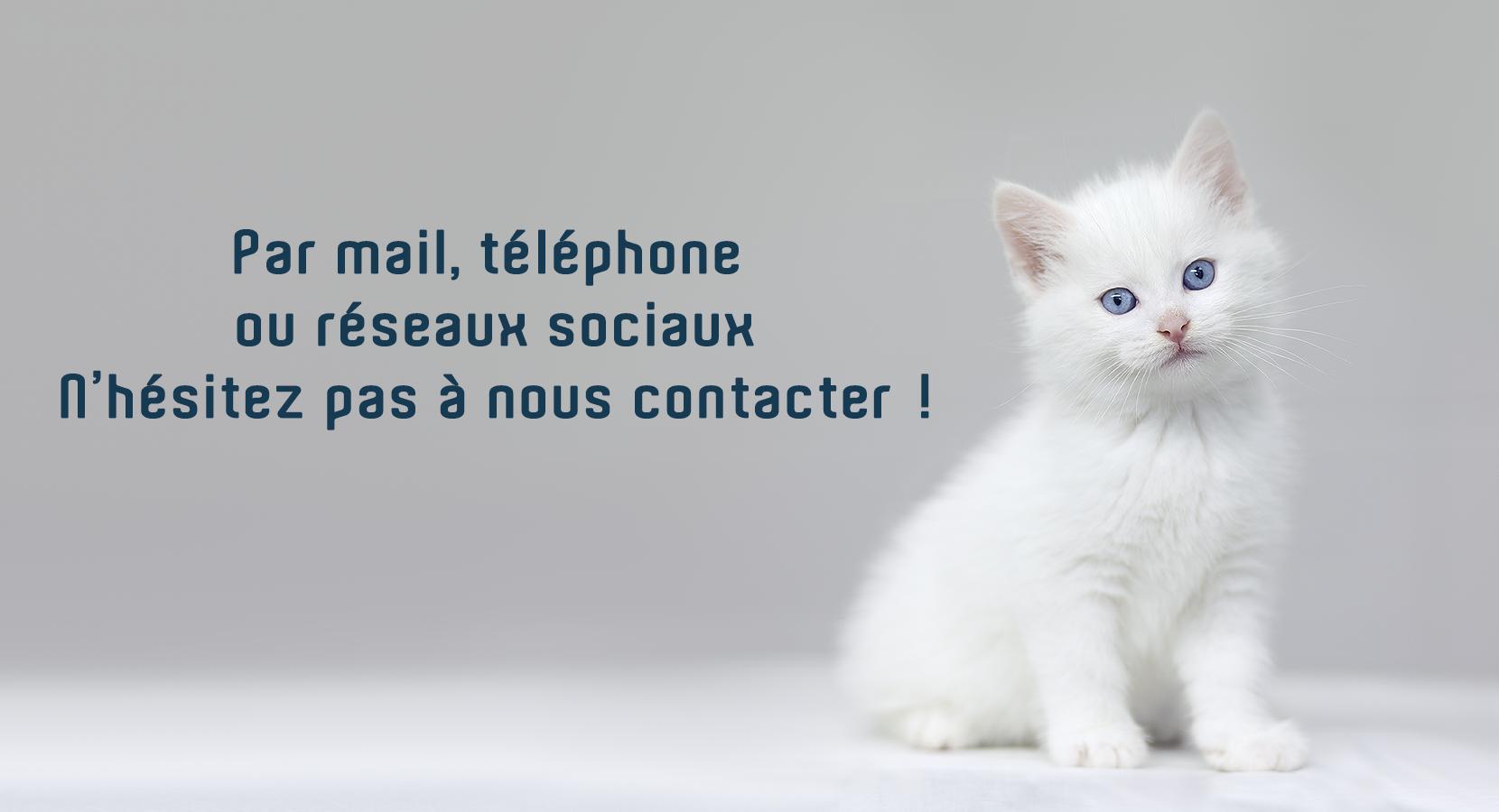Chaton blanc invitant à contacter ses vétérinaires préférés sur Lyon premier - Entrechats - Exercice exclusif en médecine et chirurgie du chat.